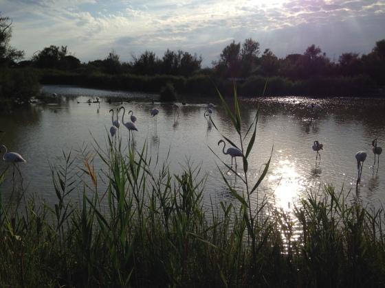 Parc ornithologique de Pont de Gau aux Saintes-Maries-de-la-Mer